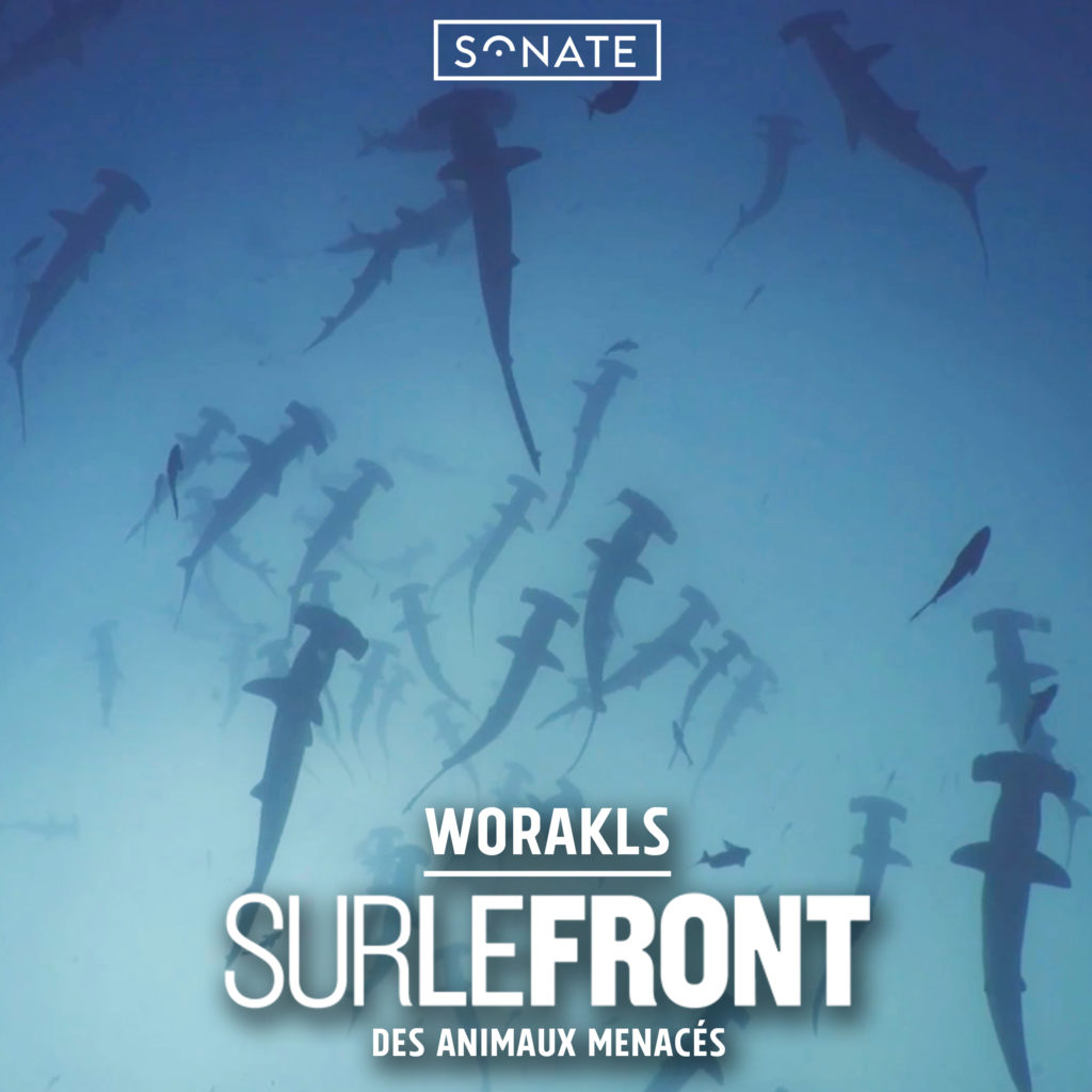 cover worakls documentaire